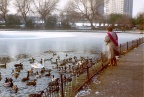 Boating Lake, Walton Hall Park, 1990s